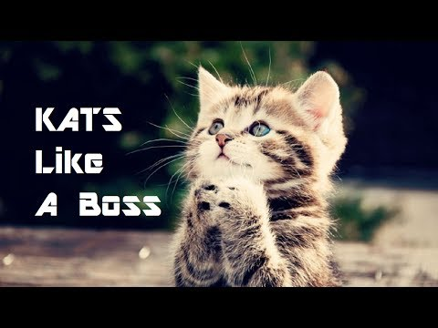 Kats Like A Boss (Cat GIF's w/ Sound) | ____LikeABoss