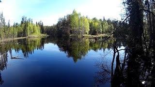 #012 Рыбалка в Карелии: удочка, поплавок, плотва, верхоплавка - рыбалка на маленькой речке.