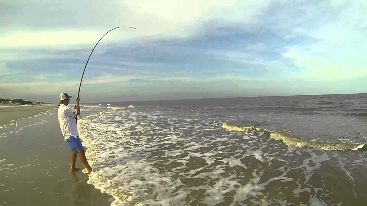 Surf fishing bull reds and sharks sgsf youtube for Shark fishing gear for beach