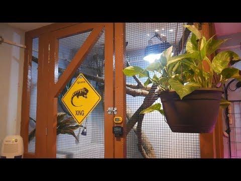 New Iguana Adoption Update and Custom Cage Build Part 5