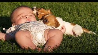 Funny and Cute Jack Russell Terrier and Baby Playing and Laughing - Dog and baby funny 2017