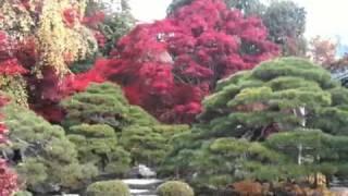 信州須坂 豪商の館田中本家博物館 秋の庭園