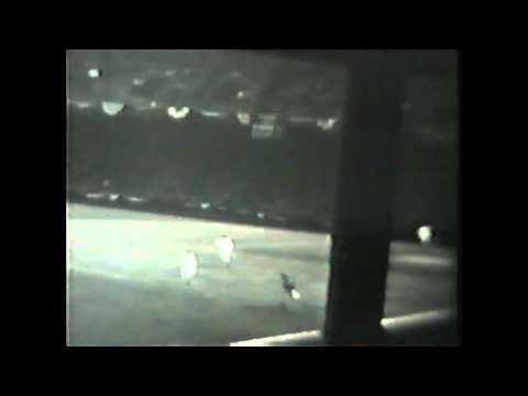 1940s Detroit Tigers  Baseball game