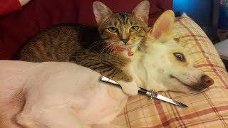 Смешные коты, кошки и другие животные (funny cats 2019) – НЕЛЬЗЯ СКУЧАТЬ, ОГНЕННЫЕ ШУТКИ