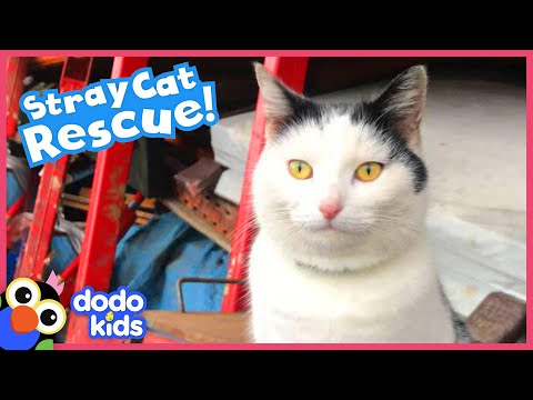 Friendly Stray Cat Has His Own Tiny House In A Car Yard   Best Animal Friends   Dodo Kids