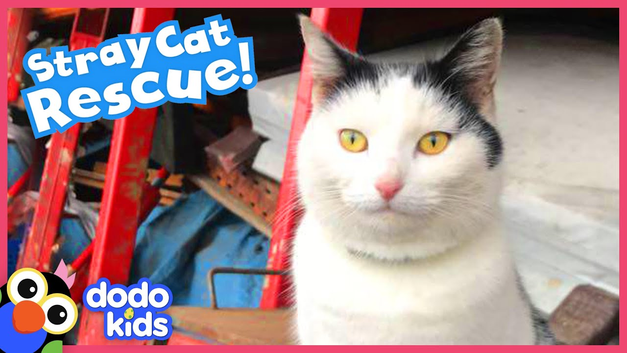 Friendly Stray Cat Has His Own Tiny House In A Car Yard | Best Animal Friends | Dodo Kids