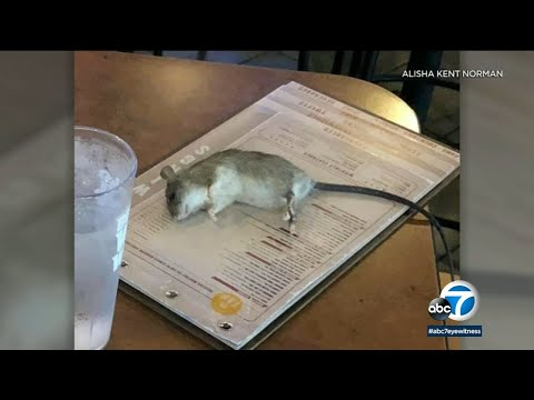 Kid Jay - GROSS: Rat falls from ceiling and onto table at Buffalo Wild Wings