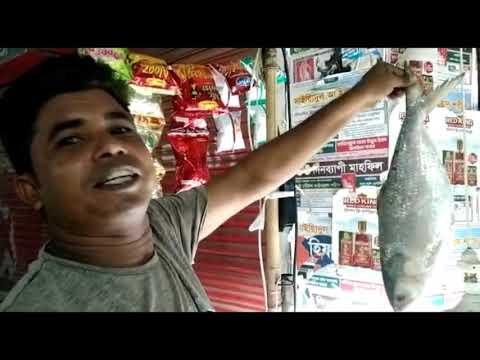 दुर्गापूजा के मौके पर बांग्लादेश ने भारत भेजी काफी इलिश मछली