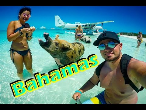 Bahamas Exuma Swimming Pigs Travel Video