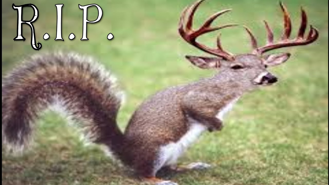 Funny Hunting Quotes Child Kills The Rarest Animal In The World The Squirrel Deer