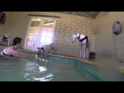 Swimming at Furkidz Resort Canning Vale