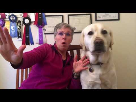Dog Aggression and Fear - Yes They are Related!