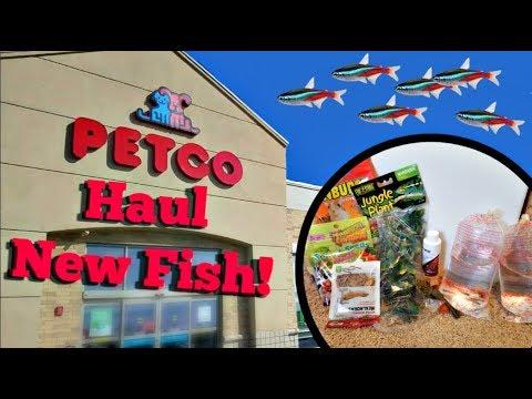 Petco Haul // New Fish!