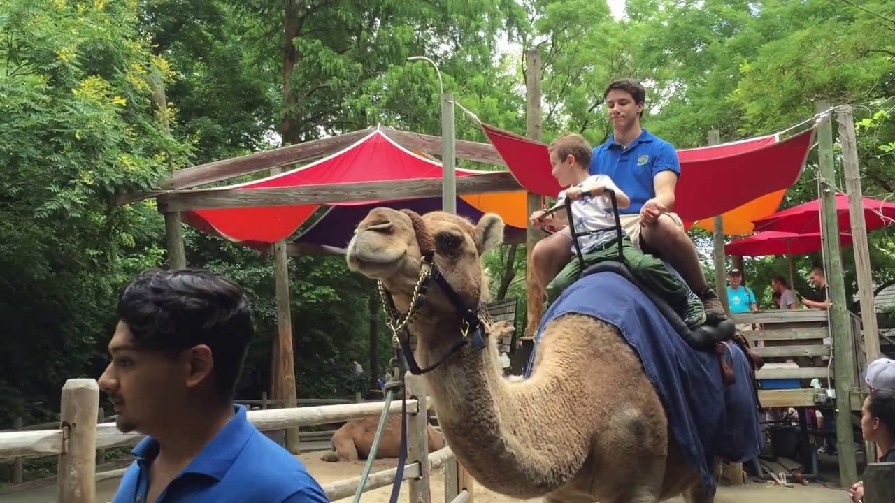 Riding A Camel At Bronx Zoo July 10 2016 Youtube