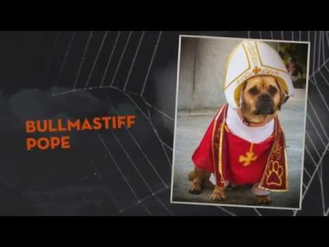 Pope Dog Costumes - YouTube