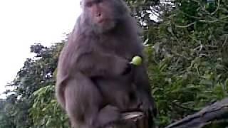 猴子不再只吃香蕉.蘋果.落花生.mp4