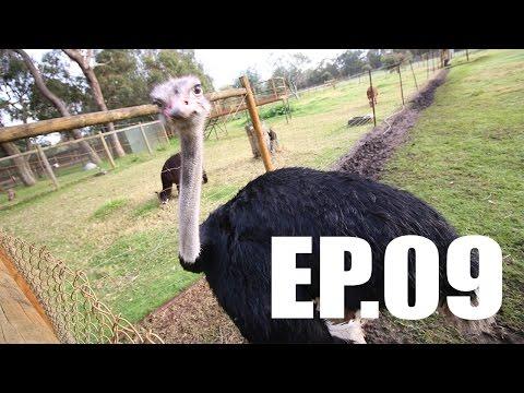 Ep.09 Jom Ke Perth | Caversham Wildlife Park