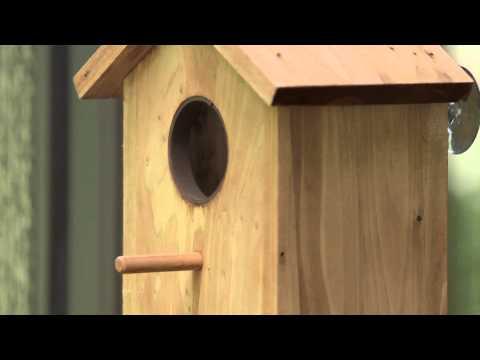 Creative Concepts Secret Bird Watcher | Product Video