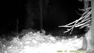 FOTOBAZUKA куница (сдвоенное видео 3) ночь