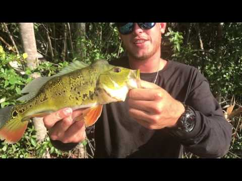 Mr_cutts Fishing For Peacock Bass !!! Naples Florida (the Movie)