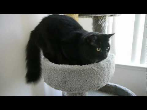 Bad Ass Cat! Best Cat Video in HD, Who say's you can't train a cat? Buster Don't Care! Meow!
