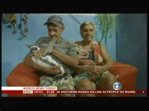 Penguin & Pensioner - best friends (Brazil) - BBC News - 19th March 2016
