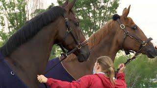 Champion horses fly First Class | Emirates SkyCarg...