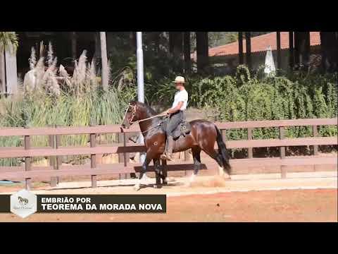 LOTE 17   Sininho Bavária
