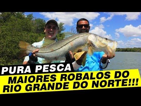 Programa Pura Pesca,Grandes robalos no Litoral do Rio Grande do Norte.