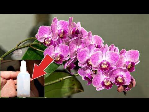 Аптечная подкормка для домашних цветов и растений творит чудеса! Перекись водорода   подкормка!