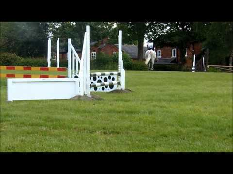 LILLY FOR SALE 14.2 Pony Club/Eventer