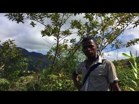 JINGLE | TSINGY DE BEMARA BEKOPAKY - Gasy net - Vidéo clip
