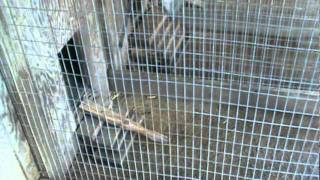 Beagle Whelping Box