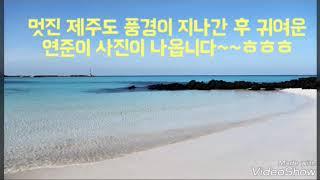 열대야 속 오연준 음악감상 2 (제주도 푸른밤)