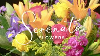 Happiness Delivered by Serenata Flowers