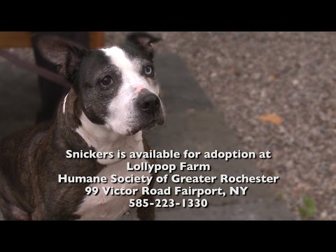 Lollypop Farm Adoptable Pets - Meet Snickers - YT