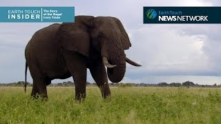 A brief history of the ivory trade