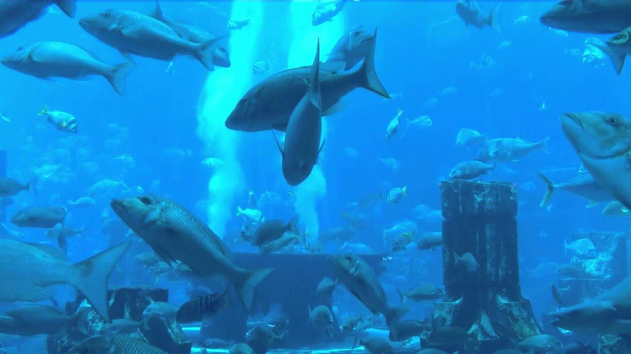 Dubai - Palm Hotel Atlantis Aquarium