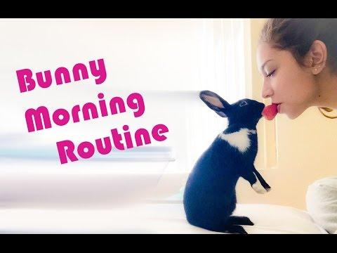 Free Roam Bunny Morning Routine