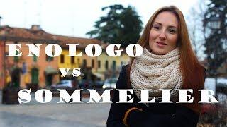Энолог и сомелье. Где и как учиться в Италии?