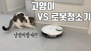 [쿠키의하루] 고양이와 로봇청소기의 첫만남! / Cat…