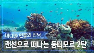 [랜선 여행✈️] 투명한 바다 속에서 스노쿨링 낚시도 하는 동티모르 2탄 [정글의 법칙|SBS 방송]