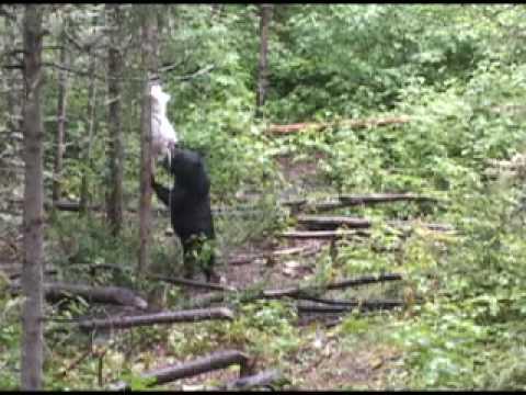 Shining Tree Camp - Ontario Canada