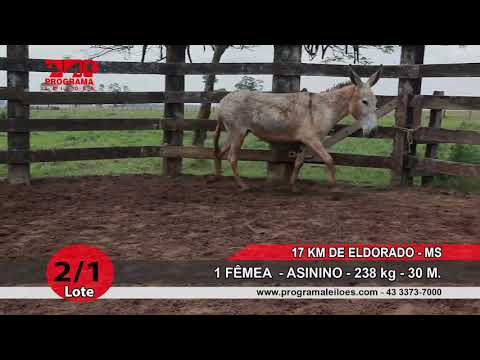 LOTE 02 1
