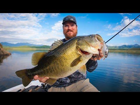 Giant Bass Everywhere!! Incredible Bass Fishing On Lake Baccarac!