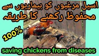 Khargosh Kiun Paalain/Why Rabbit Rearing? Dr Ashraf