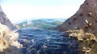 Hotel Belmar Cattolica TV : Snorkeling in Cattolica
