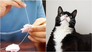 고양이 동물병원 / 베이킹 도구 언박싱 / 알바 중 딴…