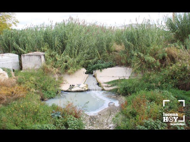 VÍDEO: El ayuntamiento espera autorización de Confederación para limpiar el cauce del río Lucena