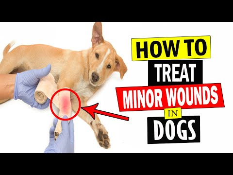 how-to-treat-minor-wounds-in-dogs-||-treat-dogs-wounds